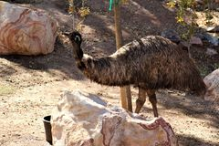 Zoo de Phoenix, centre de l'Arizona pour la conservation de la nature, Phoenix, Arizona, Etats-Unis photo stock