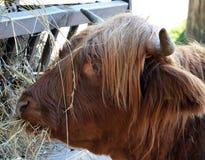 Zoo de Riga Images stock