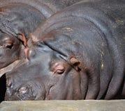 Zoo de Riga Image libre de droits