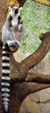Zoo de Riga Photographie stock libre de droits