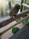 Zoo de Rotorua Photographie stock libre de droits