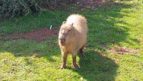 Zoo de safari de secteur de lac Images libres de droits