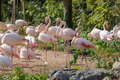 Zoo de Schonbrunn flamant image stock