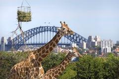 Zoo de Taronga à Sydney images stock