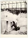 ZOO de visite de personnes d'expositions de photo de vintage Deux ours en fossé d'ours Photographie stock