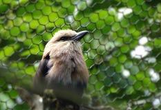 Zoo de volière d'oiseau Photo libre de droits