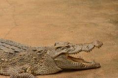 Zoo del rettile degli alligatori, Tailandia Fotografie Stock Libere da Diritti