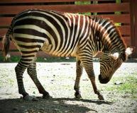 Zoo della valle di Lehigh Immagine Stock Libera da Diritti