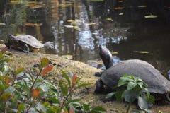 Zoo di Amneville: tartaruga Immagini Stock