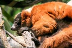 Zoo di Bronx Immagini Stock Libere da Diritti