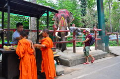 Zoo di Chiangmai Fotografia Stock Libera da Diritti