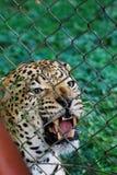 Zoo di Entebbe lungo il lago Vittoria nell'Uganda fotografia stock libera da diritti