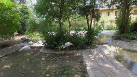 Zoo di Saigon e giardini botanici stock footage