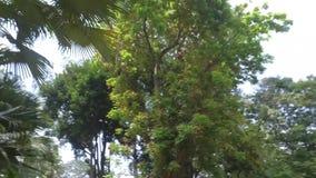 Zoo di Saigon e giardini botanici archivi video