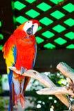 Zoo di San Diego Immagine Stock