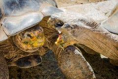 Zoo di San Diego Immagini Stock
