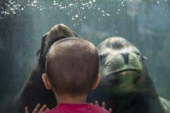 Zoo di Ueno a Tokyo, Giappone Immagine Stock