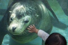 Zoo di Ueno a Tokyo, Giappone Fotografia Stock Libera da Diritti