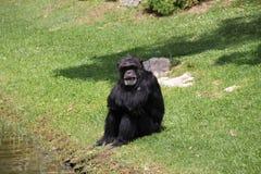 Zoo du Portugal, Lisbonne Photographie stock
