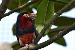 Zoo exotique de Londres d'oiseau images libres de droits