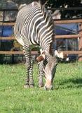 zoo för 17 moscow royaltyfri bild