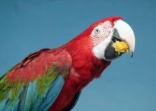 zoo för 70 moscow arkivfoton