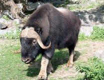 zoo för 90 moscow Royaltyfria Bilder