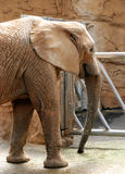 zoo för elefantmysore park Royaltyfria Foton