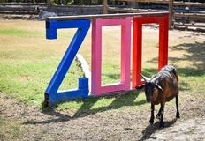 Zoo. A goat in the zoo Stock Photo