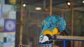 Zoo-granja del loro del Macaw que se sienta en un zoo-granja del tocón metrajes