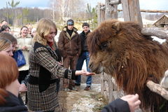 Zoo Hunting grounds in the Kaluga region. Royalty Free Stock Photography