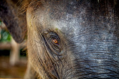 Zoo i Nya Zeeland Royaltyfria Bilder