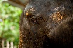 Zoo i Nya Zeeland Royaltyfria Foton
