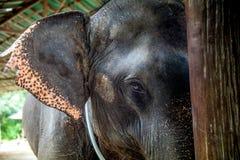 Zoo i Nya Zeeland Fotografering för Bildbyråer