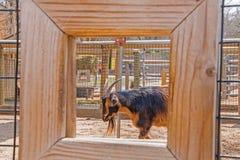 Zoo i Sioux Falls, South Dakota är en vänlig dragning för familj för alla åldrar fotografering för bildbyråer