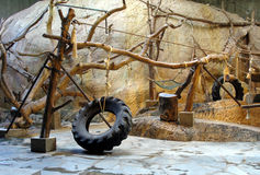 Zoo interior. For chimpanzees with tires and trees Stock Photos