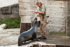 Zoo keeper f the Vienna Zoo feeds sea lion royalty free stock image