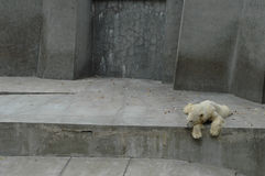 Zoo-Leben   Lizenzfreie Stockbilder
