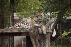 Zoo Negara, Malaysia Fotografering för Bildbyråer