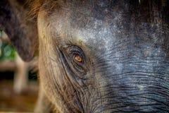 Zoo in Neuseeland Lizenzfreie Stockbilder
