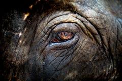 Zoo in Neuseeland Lizenzfreie Stockfotos