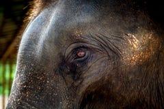 Zoo in Neuseeland Lizenzfreies Stockbild
