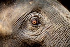 Zoo in Neuseeland Stockfoto