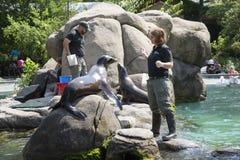 Zoo New York U.S.A. del Central Park Fotografie Stock Libere da Diritti