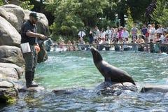 Zoo New York U.S.A. del Central Park Fotografia Stock Libera da Diritti