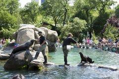 Zoo New York U.S.A. del Central Park Fotografia Stock