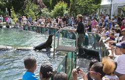 Zoo New York U.S.A. del Central Park Immagine Stock