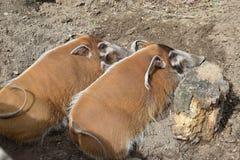 Zoo in Opole Lizenzfreie Stockbilder