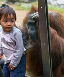 Zoo Orangutan With Children Stock Image