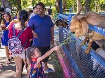 Zoo ouvert de Khao Kheow Photographie stock libre de droits